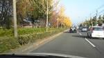 秋の京都川端通り