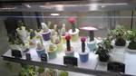 銀座か新宿の花屋さん